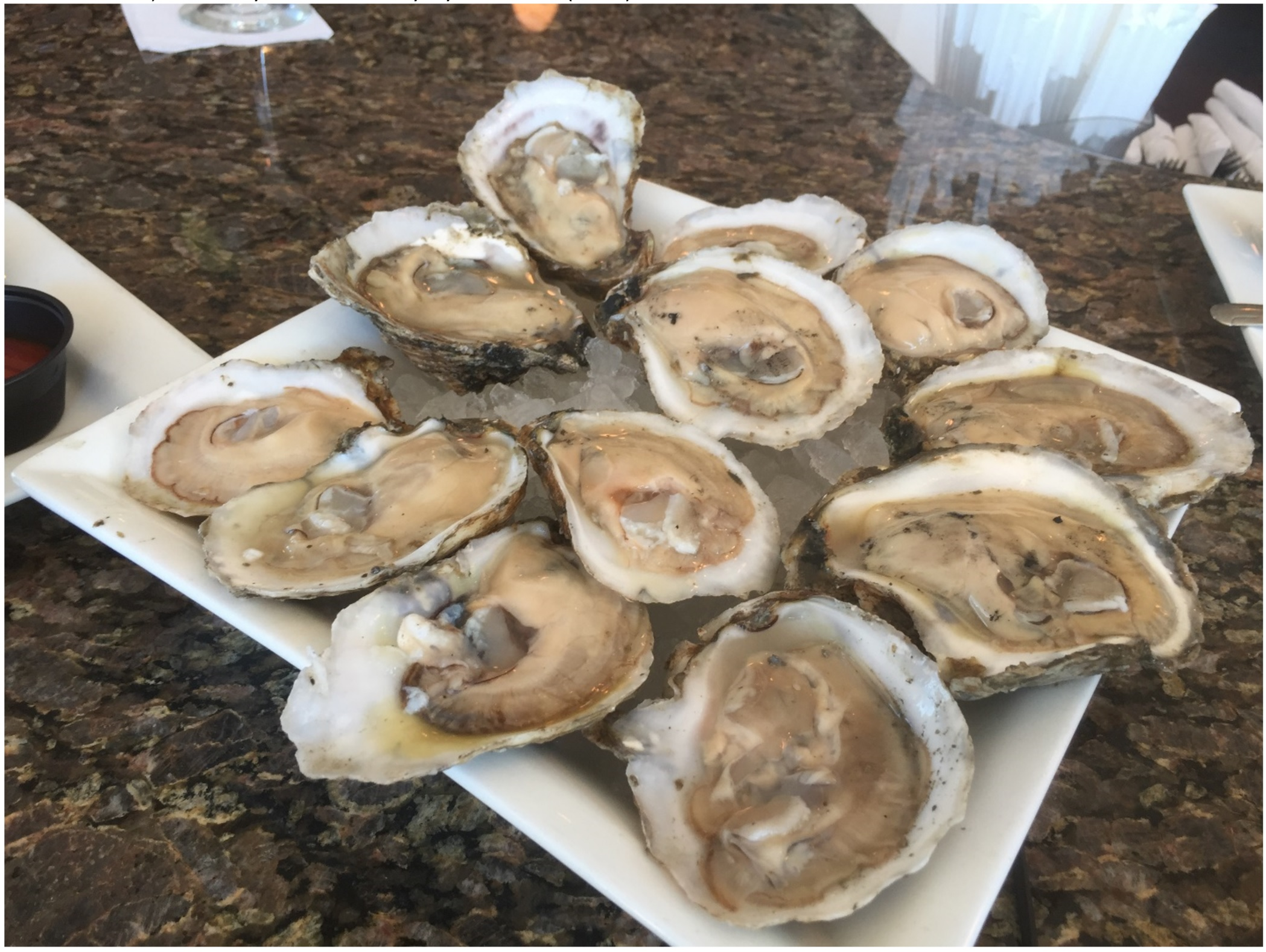 Oyster blog image
